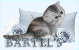 BARTEL'S Persians and exotics