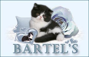 An den Beitrag angehängtes Bild: http://www.bartels-exo.dk/Jel%20ban.jpg