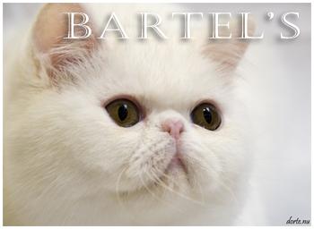 An den Beitrag angehängtes Bild: http://www.bartels-exo.dk/Prince%20banner%20.jpg